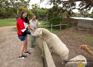 Girl at a farm feeding a sheep