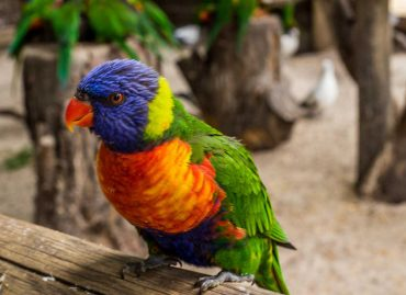 a colourful bird on a branch